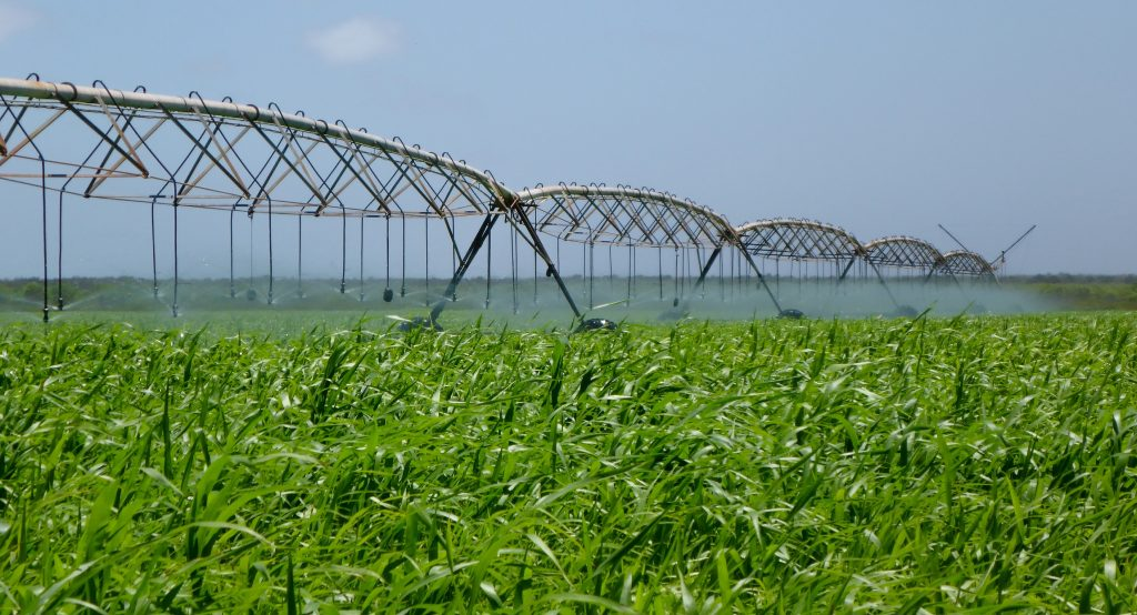 Centre pivot irrigation of sorghum along the Pilbara coast